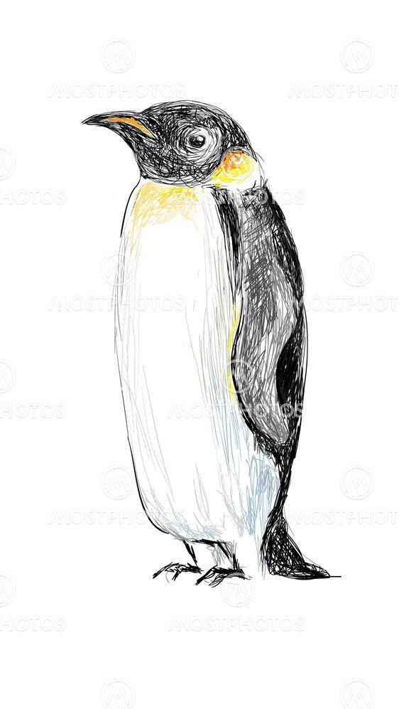 Pingviini Piirretty