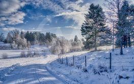 Vinterväg i skogen