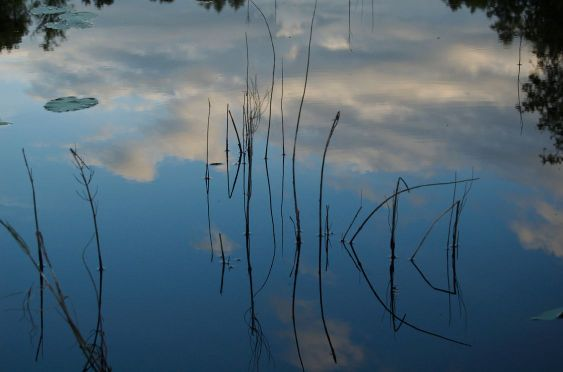 Reeds and clouds in water