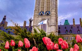 The Canadian Parliament during Spring with red tulips in...