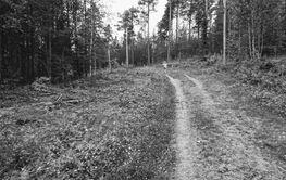 Liten flicka springer i stor skog