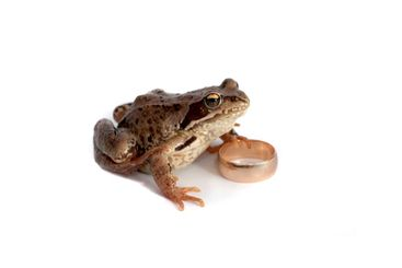 Frog and a wedding ring