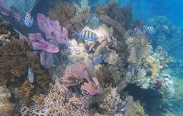 reef scenery with corals, fish and shells