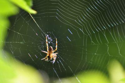 Spinning spider
