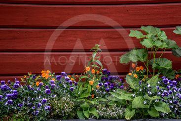 blommor på väggen
