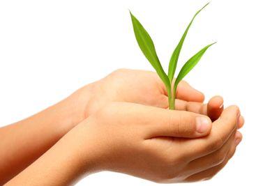 green plant in children hands