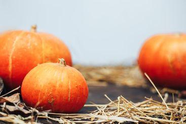autumn halloween pumpkins on wooden background and hen