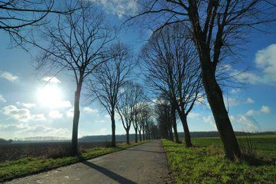 Tree avenue in the sunshine