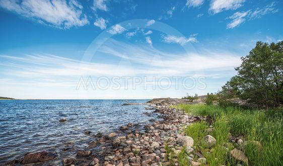 Shoreline in the baltic sea during summer