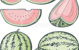 Watermelon Sketches