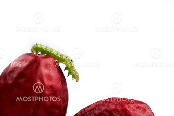 Förbjuden frukt dating