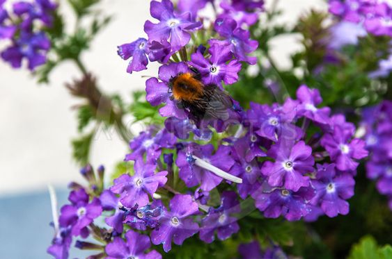 a bee sitting on a purple color flower
