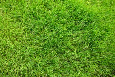 green grass field close-up