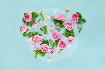 Creative layout with pink tea rose flowers, petals and...