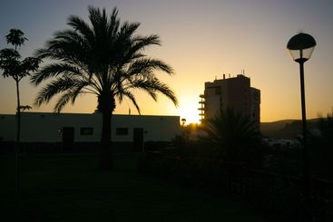 Hotel and palm tree in sunset