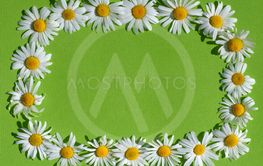 Frame with daisies on green background.