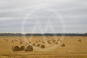 Hay Roll in a meadow against a cloudy sky