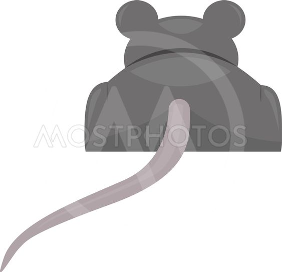 Gray mouse back