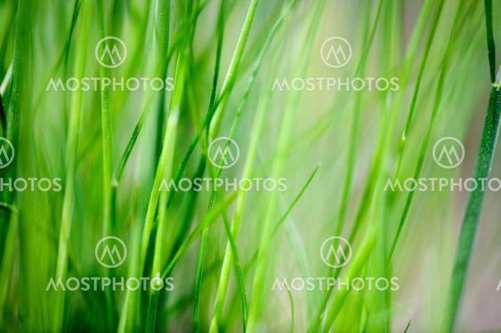 Græs baggrund