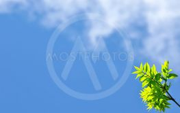 Empty blue sky background, clouds, green leafs