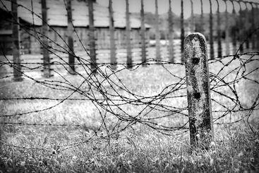 Taggtråd stängsel utanför Auschwitz Birkenau, svartvitt.