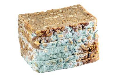 Mouldy Bread | Verschimmeltes Brot