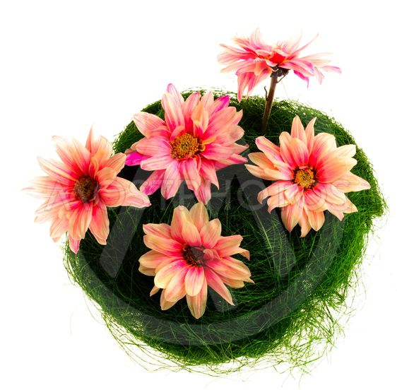 Pink daisies in nest