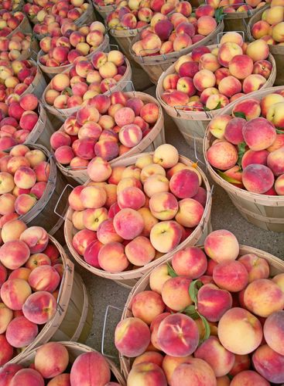 Bushels of Fresh Peaches
