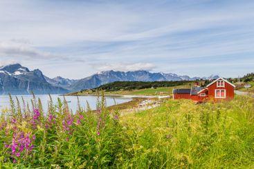 Typical Scandinavian landscape