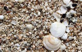 Snäckor på en sandstrand