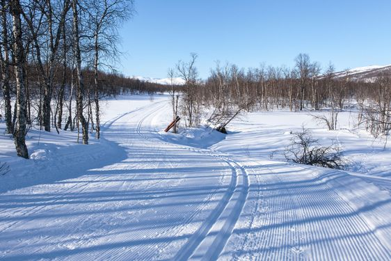 Cross-country track in mountain birch-wood.