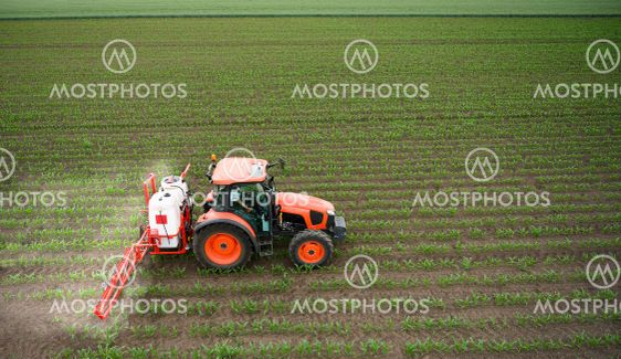Tractor spraying corn field