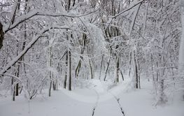 Snow road in winter forest