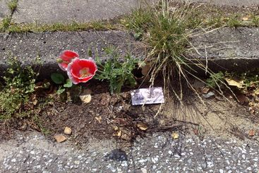 The red flower growing on asphalt, the card, grass.