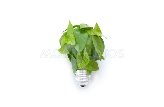 Light bulb made of green leaves