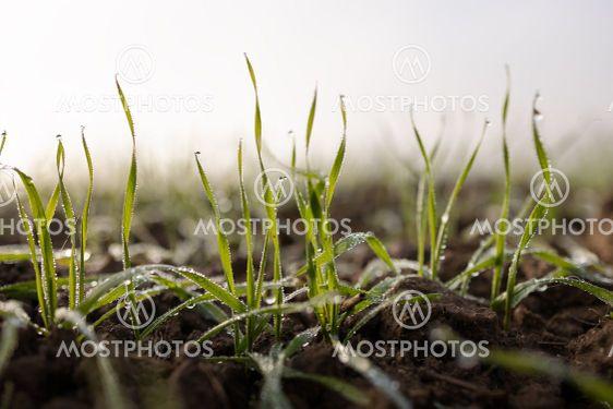 Grünes Gras im Morgentau