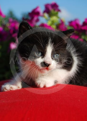 Small black and white cat 2
