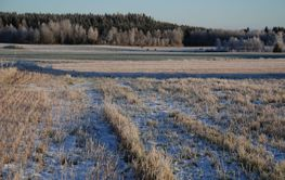 Frost på åkrarna  (Sweden)