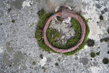 Ring with moss on old grave