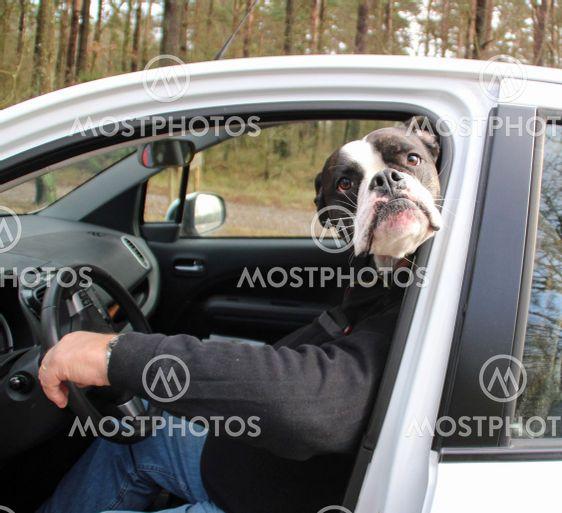 Rolig hundbild