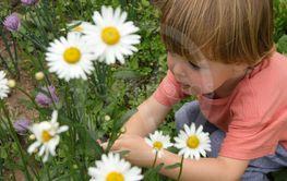 Toddler picking camomiles in garden