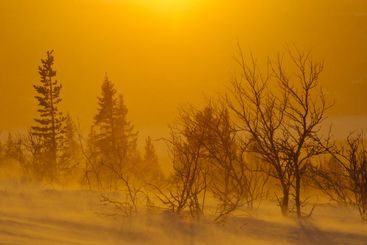 Silhouette of trees at sunset, Lofsdalen, Härjedalen,...