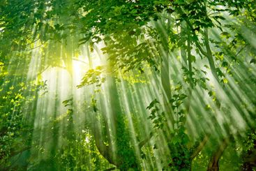 magic sunlights in forest