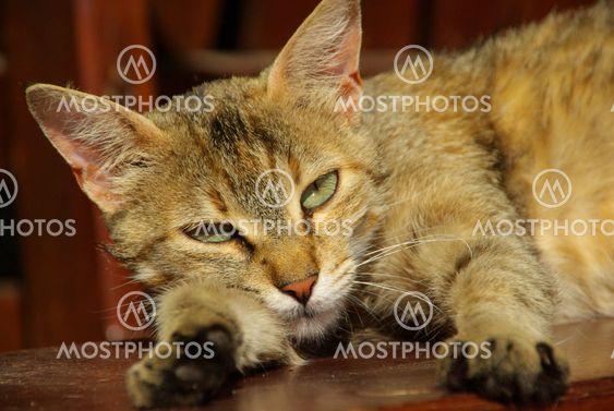 Katze - cat 16