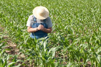 praying farmer