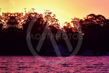 Seascape sunrise panorama with trees in silhouette.