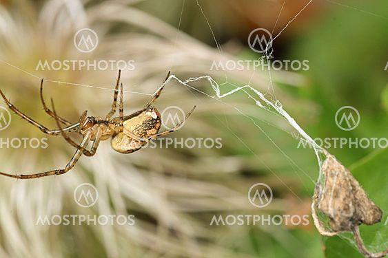 Closeup af en edderkop i sit web