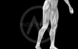 Concept or conceptual stong human or man 3D anatomy lower...