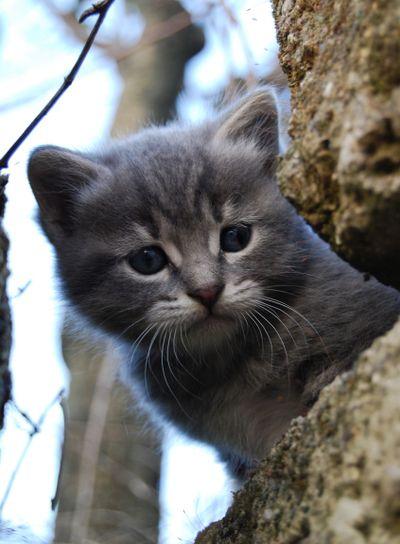 Small grey cat 4