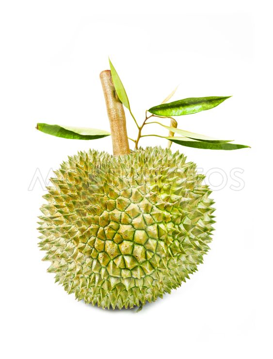 durian fruit and green leaves.